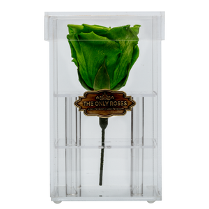 Green Preserved Rose | Petite Acrylic Rose Box - The Only Roses