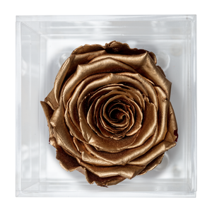 Gold Preserved Rose | Petite Acrylic Rose Box - The Only Roses