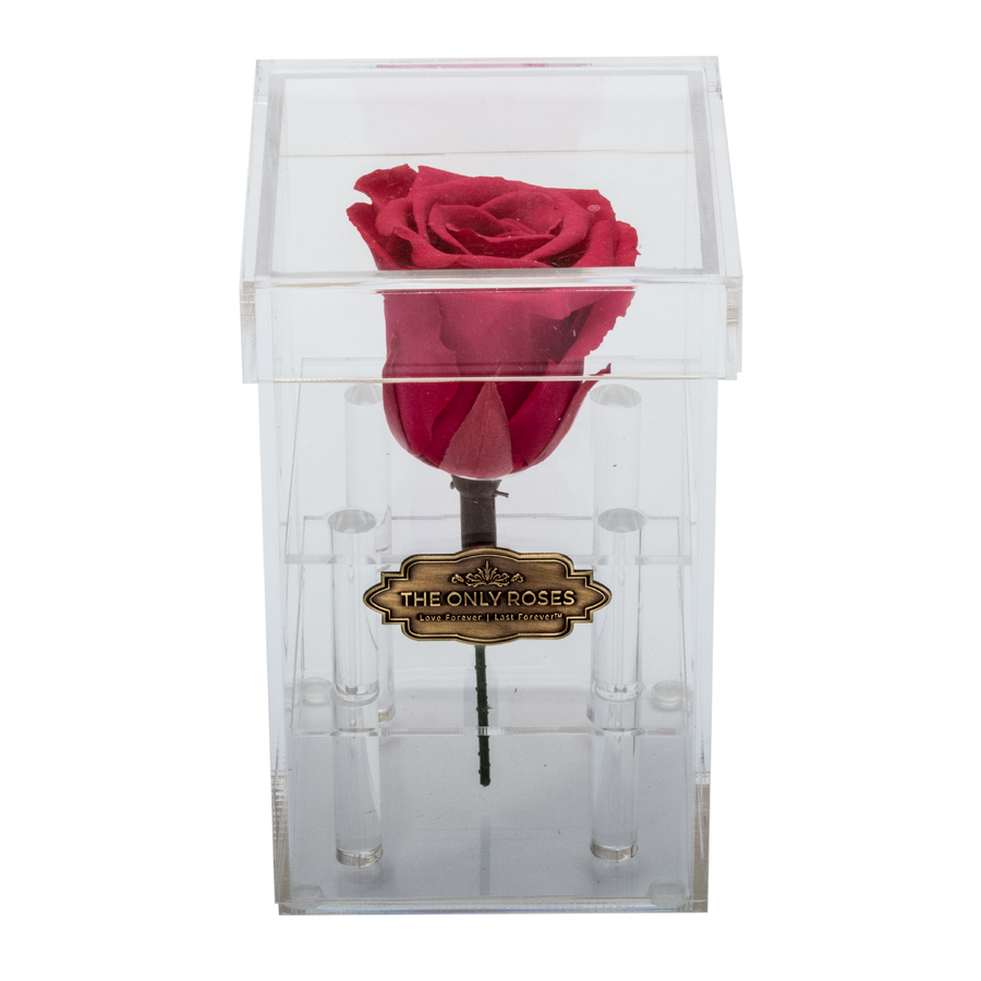 Dark Pink Preserved Rose | Petite Acrylic Rose Box - The Only Roses