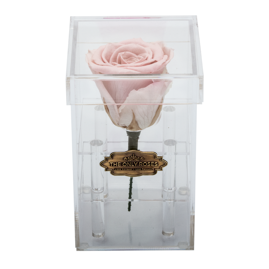 Baby Pink Preserved Rose | Petite Acrylic Rose Box - The Only Roses