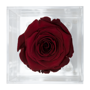 Dark Red Preserved Rose | Petite Acrylic Rose Box - The Only Roses