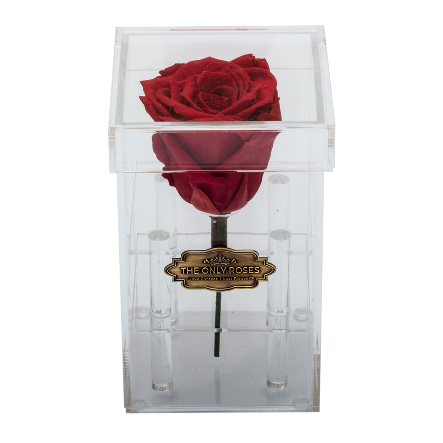 Red Preserved Rose | Petite Acrylic Rose Box - The Only Roses