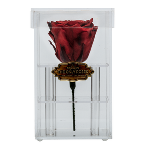 Fire Red Preserved Rose | Petite Acrylic Rose Box - The Only Roses