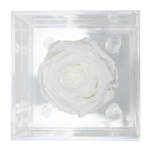 White Preserved Rose | Petite Acrylic Rose Box - The Only Roses