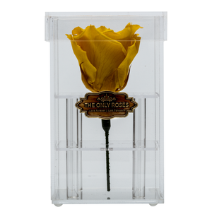 Light Yellow Preserved Rose | Petite Acrylic Rose Box - The Only Roses