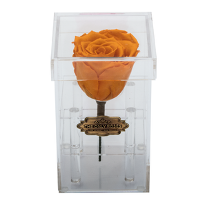 Yellow Preserved Rose | Petite Acrylic Rose Box - The Only Roses