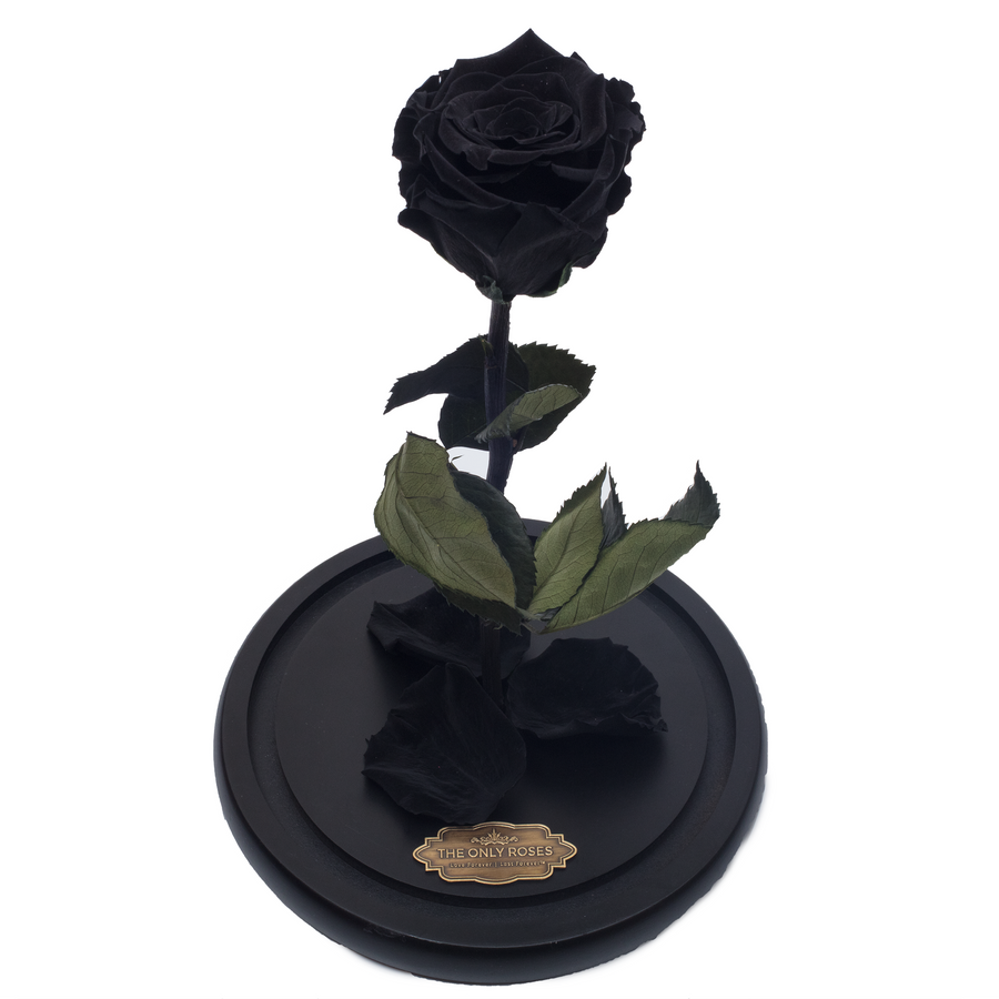 Black Preserved Rose | Beauty and The Beast Glass Dome - The Only Roses