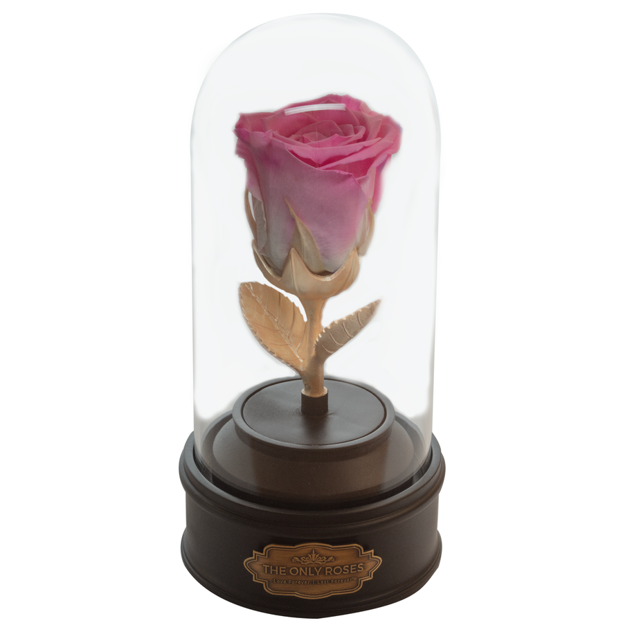 Pink Preserved Rose | Beauty and The Beast Music Globe - The Only Roses