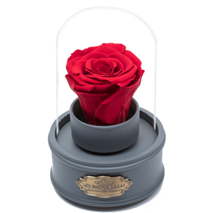 Red Preserved Rose|The Only Regular Grey Music Globe - The Only Roses