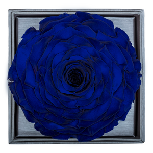 Royal Blue Mega Preserved Rose | Crystalline Rose Box - The Only Roses
