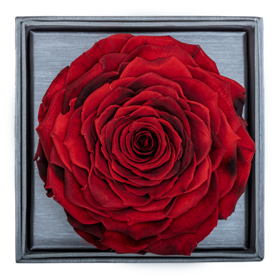Fire Red Mega Preserved Rose | Crystalline Rose Box - The Only Roses