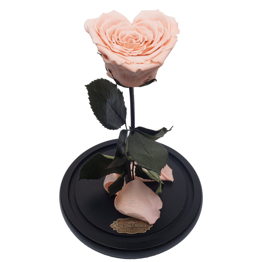 Peach with Crystal Dust Heart Shape Preserved Rose | Beauty and The Beast Glass Dome - The Only Roses
