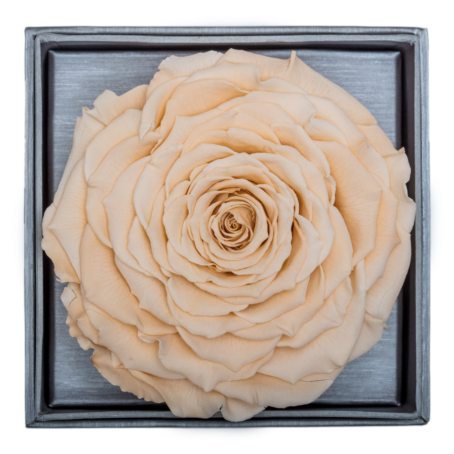 Peach Mega Preserved Rose | Crystalline Rose Box - The Only Roses