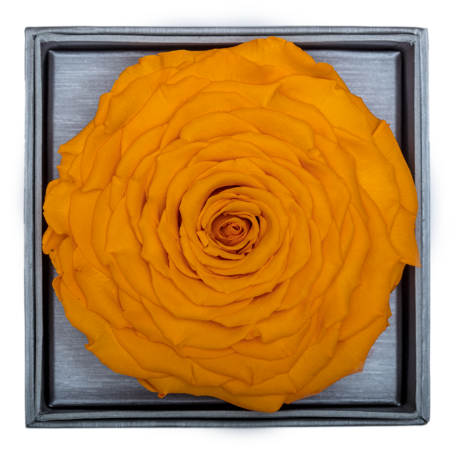 Yellow Mega Preserved Rose | Crystalline Rose Box - The Only Roses