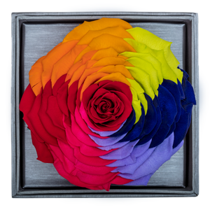 Rainbow Mega Preserved Rose | Crystalline Rose Box - The Only Roses