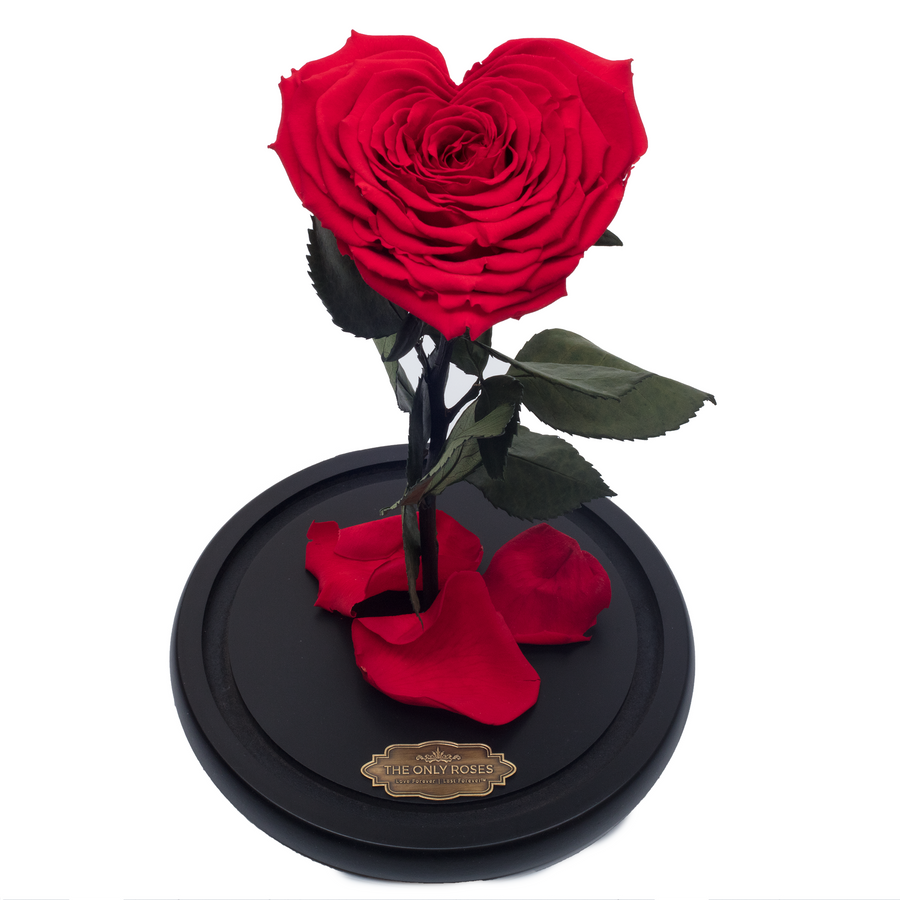 Red Heart Shape Preserved Rose | Beauty and The Beast Glass Dome - The Only Roses