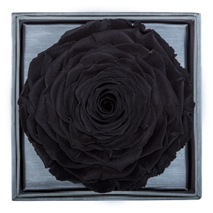 Black Mega Preserved Rose | Crystalline Rose Box - The Only Roses