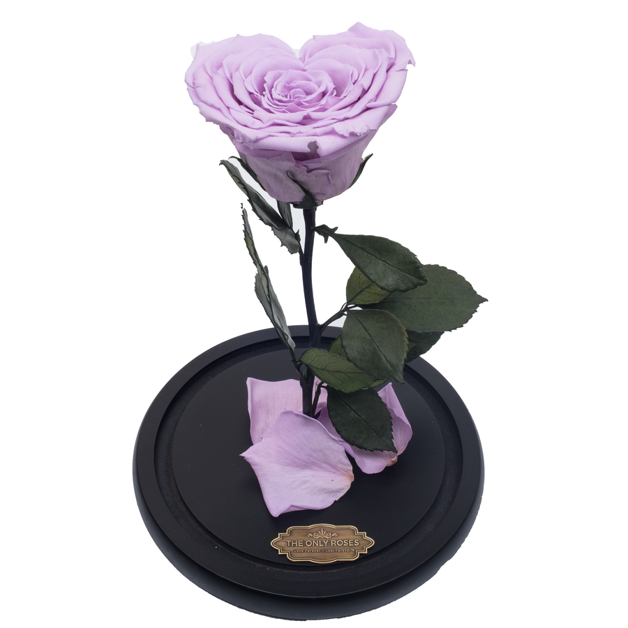Purple Heart Shape Preserved Rose | Beauty and The Beast Glass Dome - The Only Roses