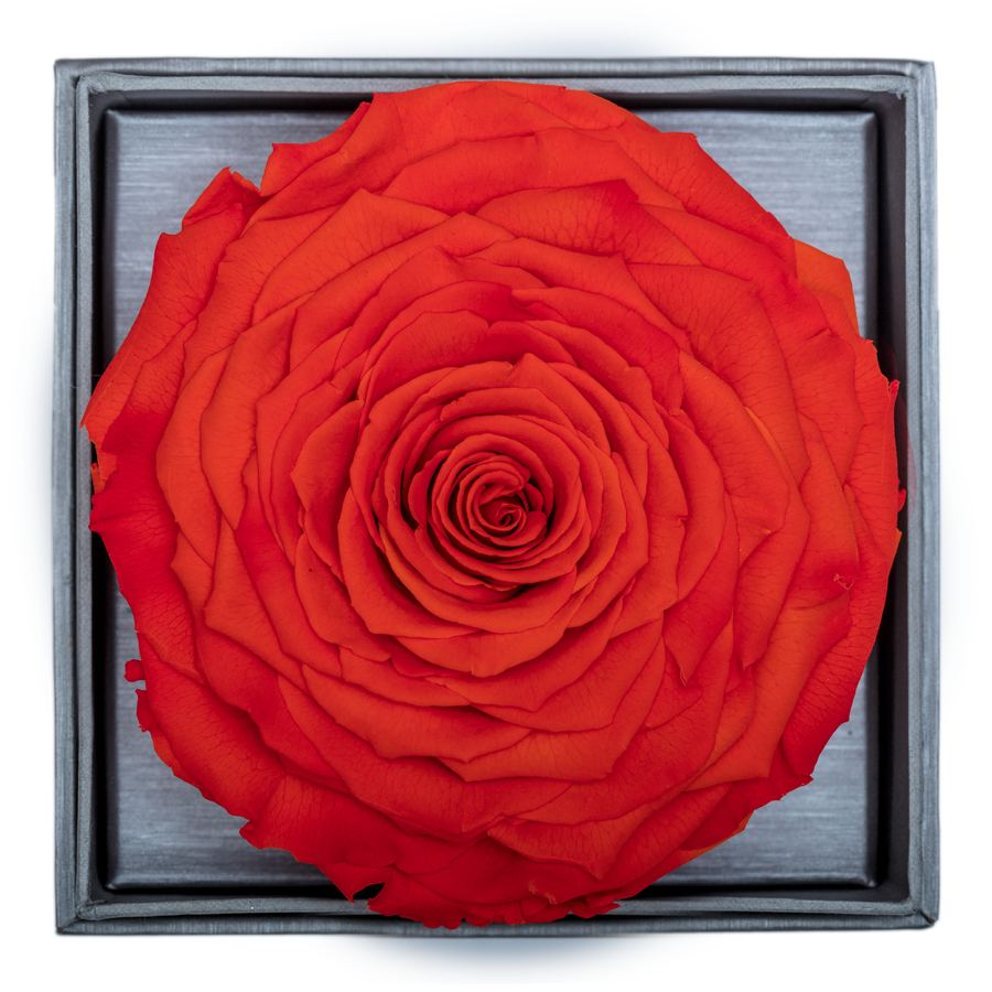 Orange Mega Preserved Rose | Crystalline Rose Box - The Only Roses
