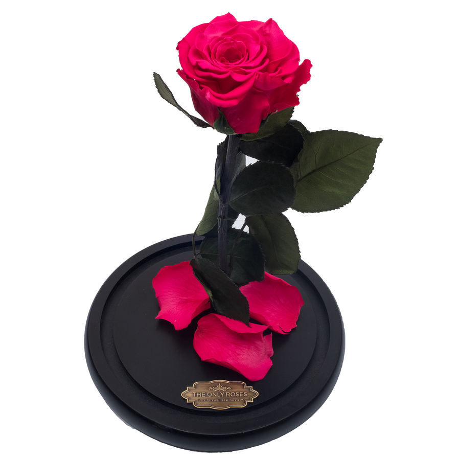 Watermelon Red Preserved Rose | Beauty and The Beast Glass Dome - The Only Roses
