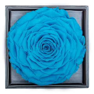 Blue Mega Preserved Rose | Crystalline Rose Box - The Only Roses