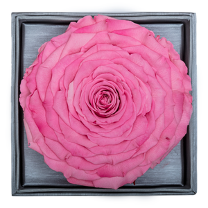 Pink Mega Preserved Rose | Crystalline Rose Box - The Only Roses
