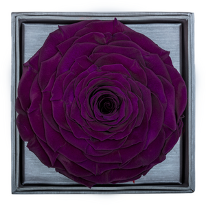 Dark Purple Mega Preserved Rose | Crystalline Rose Box - The Only Roses