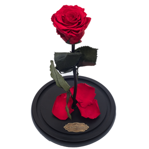 Red Preserved Rose | Beauty and The Beast Glass Dome - The Only Roses