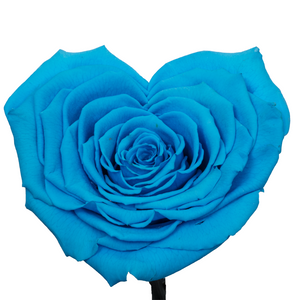 Blue Heart Shape Preserved Rose | Beauty and The Beast Glass Dome - The Only Roses