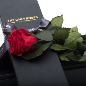 The Only | 1 Red Preserved Long Stem Rose Bouquet - The Only Roses