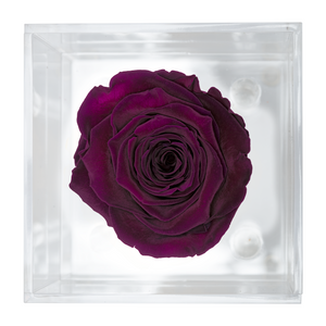 Dark Purple Preserved Rose | Petite Acrylic Rose Box - The Only Roses