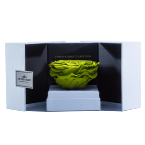 Light Green Mega Preserved Rose | Swing Opening Box - The Only Roses