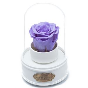 Purple Preserved Rose|The Only Regular White Music Globe - The Only Roses