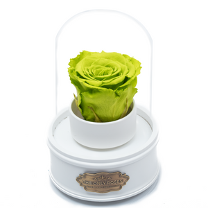 Green Preserved Rose|The Only Regular White Music Globe - The Only Roses