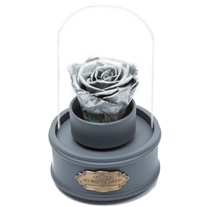 Silver Preserved Rose|The Only Regular Grey Music Globe - The Only Roses