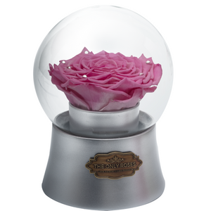 Pink Preserved Rose|The Only Large Silver Music Globe - The Only Roses