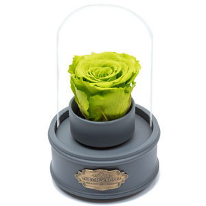 Green Preserved Rose|The Only Regular Grey Music Globe - The Only Roses