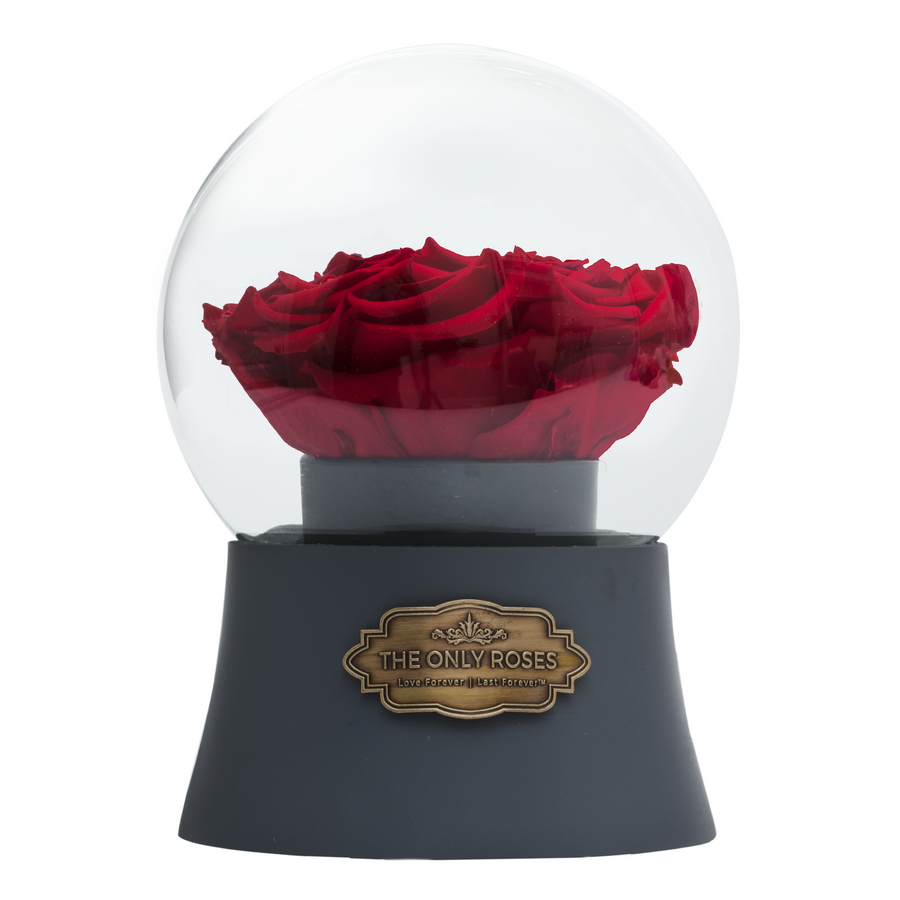 Red Preserved Rose|The Only Large Grey Music Globe - The Only Roses