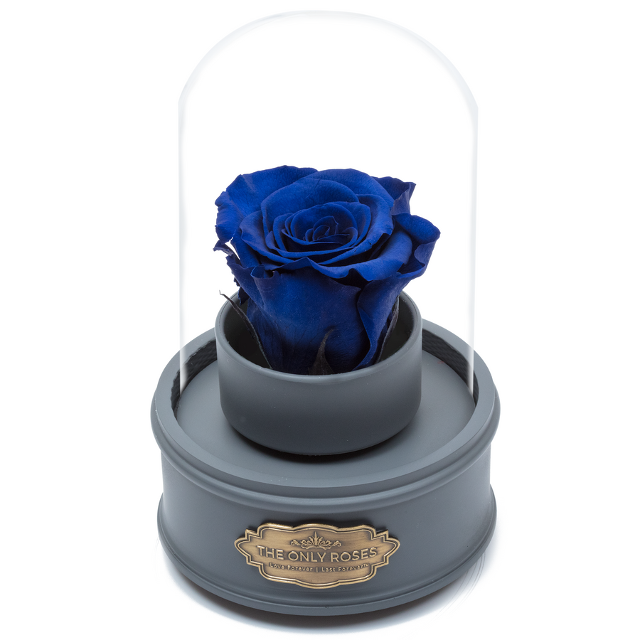 Royal Blue Preserved Rose|The Only Regular Grey Music Globe - The Only Roses