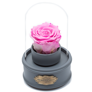Pink Preserved Rose|The Only Regular Grey Music Globe - The Only Roses