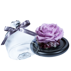 Purple Preserved Rose | Glass Dome with Heart Handle - The Only Roses