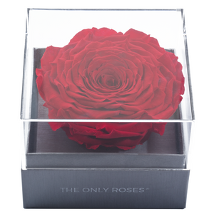 Red Mega Preserved Rose | Crystalline Rose Box - The Only Roses