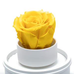 Yellow Preserved Rose|The Only Regular White Music Globe - The Only Roses