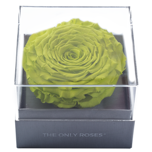 Bright Green Mega Preserved Rose | Crystalline Rose Box - The Only Roses