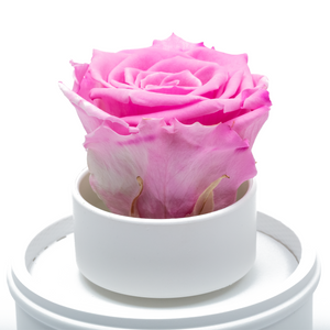 Pink Preserved Rose|The Only Regular White Music Globe - The Only Roses