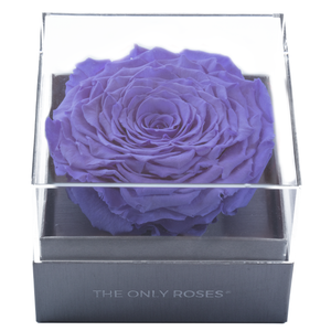 Purple Mega Preserved Rose | Crystalline Rose Box - The Only Roses