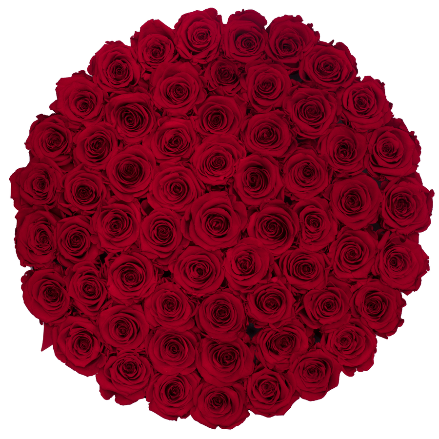 Red Preserved Roses | Large Round White Huggy Rose Box - The Only Roses
