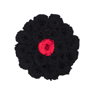 Black & One Red Preserved Roses | Small Round Black Huggy Rose Box - The Only Roses