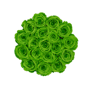Green Preserved Roses | Small Round White Huggy Rose Box - The Only Roses