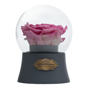 Pink Preserved Rose|The Only Large Grey Music Globe - The Only Roses